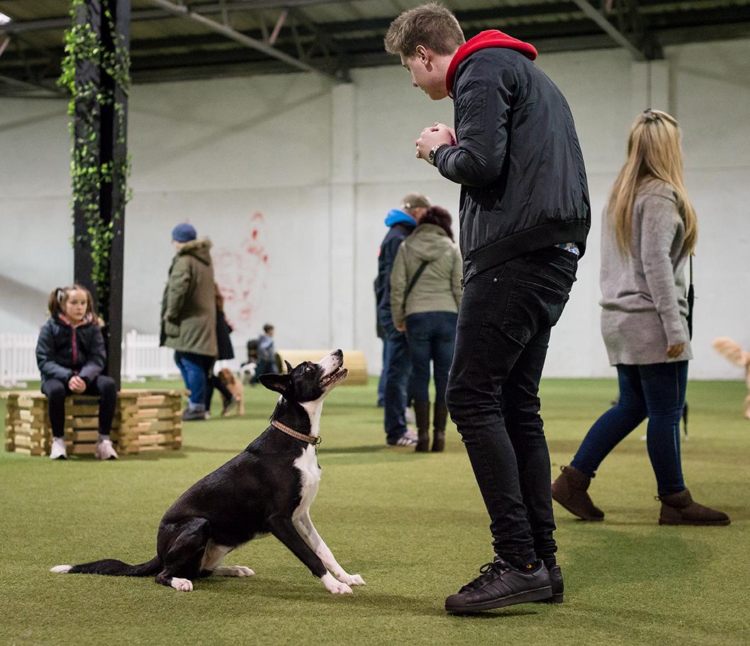 Dog Training Classes Bridgend