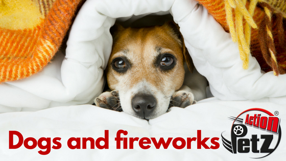 Dogs and fireworks - Action Petz Blog