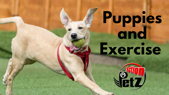 Puppies Exercise Action Petz Blog