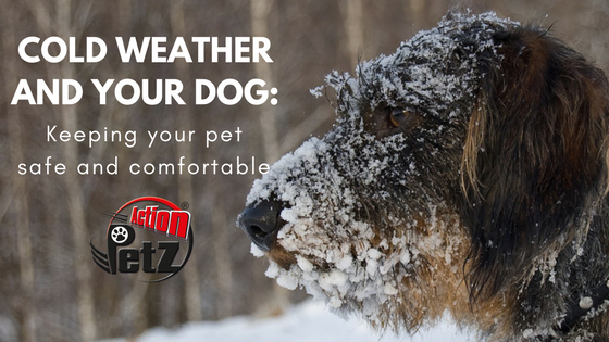 Action Petz Blog Cold weather and your dog
