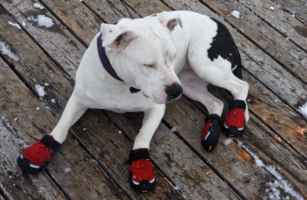 Action Petz Blog Dogs Cold Weather Dog Wearing Shoes Boots