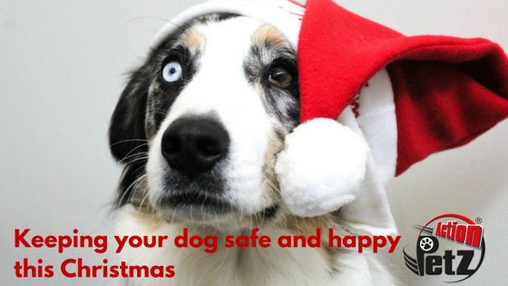 Action Petz Blog Keeping your dog safe and happy this Christmas.Dog wearing a Christmas hat