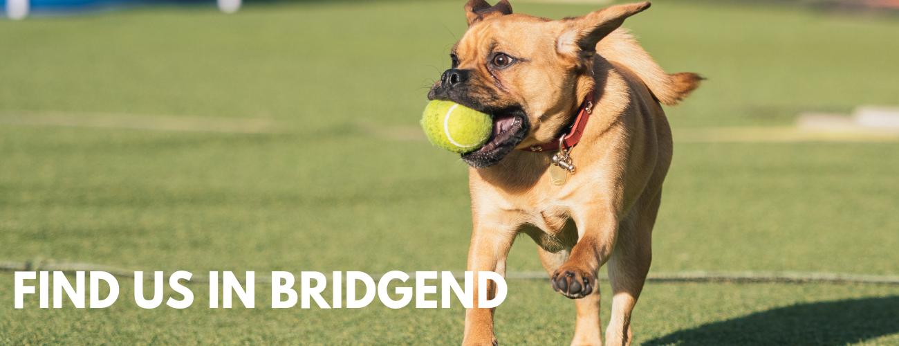 Dog playcentre Bridgend Action Petz