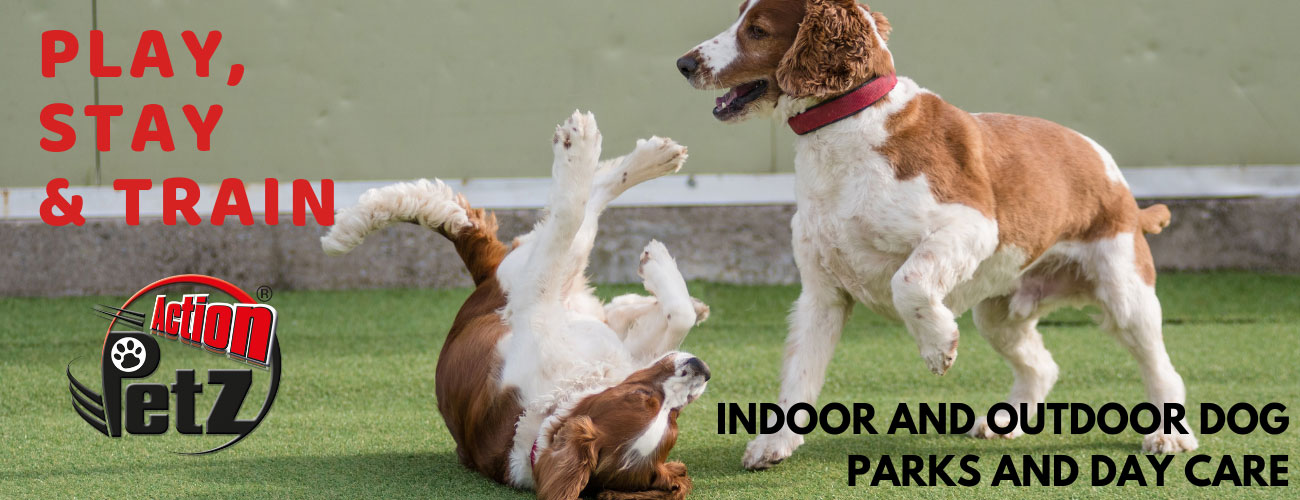Action Petz Indoor and Outdoor Dog Parks