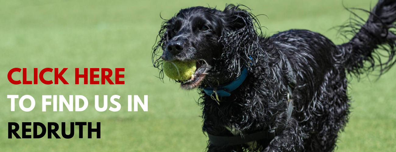 Action Petz Redruth Dog Day Care daycare