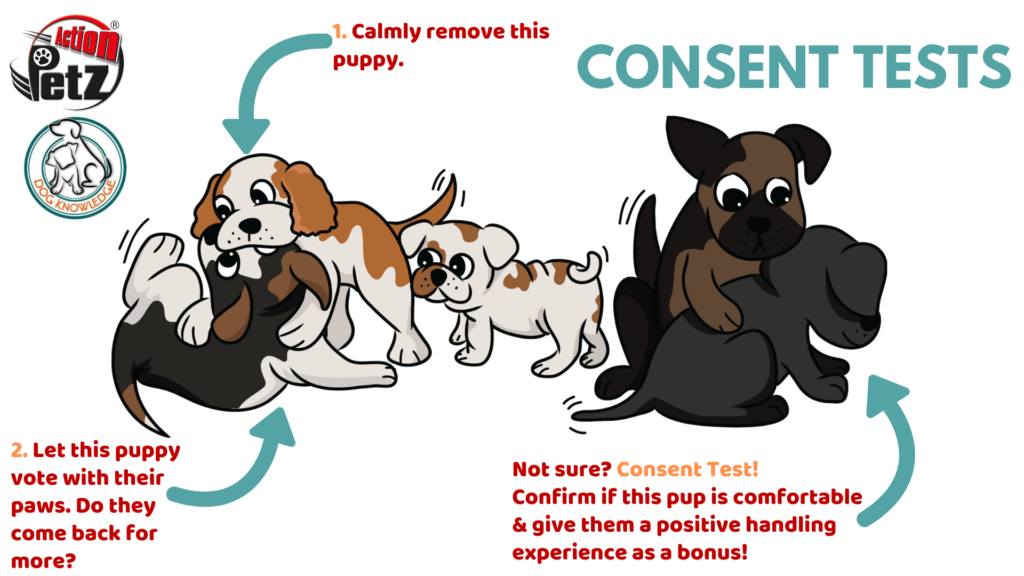 Cartoon Puppies Playing Consent Test Action Petz