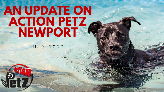 Action Petz Newport Update